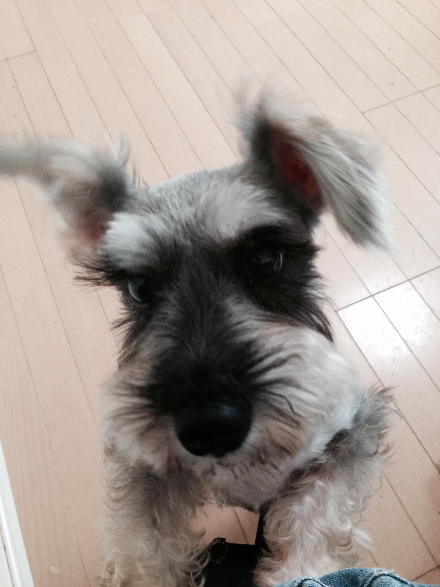 ファニー (2).JPG